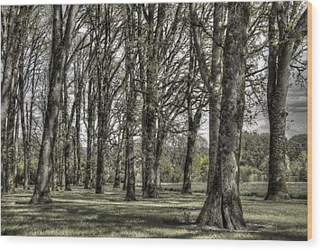 Shady Grove Wood Print by Jean Noren