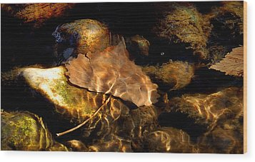 Shallow Beauty Wood Print by Steven Milner