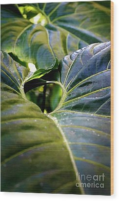 Wood Print featuring the photograph Shapes Of Hawaii 11 by Ellen Cotton