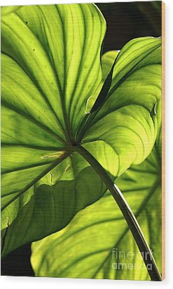 Wood Print featuring the photograph Shapes Of Hawaii 12 by Ellen Cotton