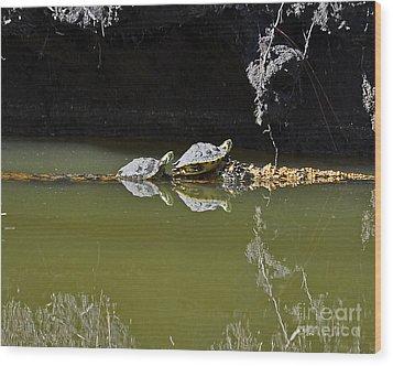 Sharing Sliders Wood Print by Al Powell Photography USA