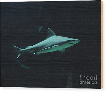Shark-09451 Wood Print by Gary Gingrich Galleries