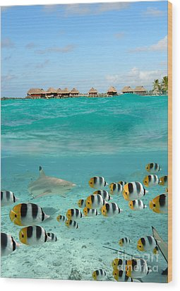 Over-under With Shark And Butterfly Fish At Bora Bora Wood Print