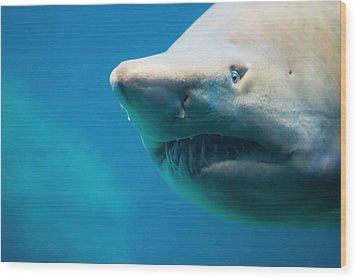Shark Wood Print by Johan Swanepoel