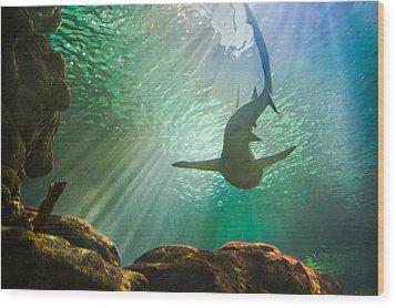 Shark Tank Wood Print by Bill Pevlor