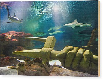 Shark Tank Trident Wood Print by Bill Pevlor