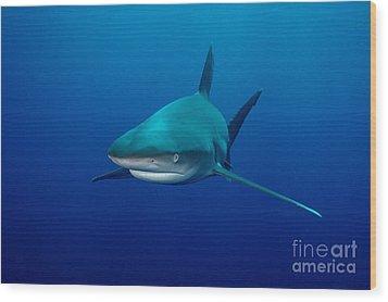 Sharks Wood Print by Boon Mee