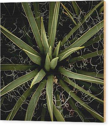 Sharp Points - Yucca Plant Wood Print by Steven Milner
