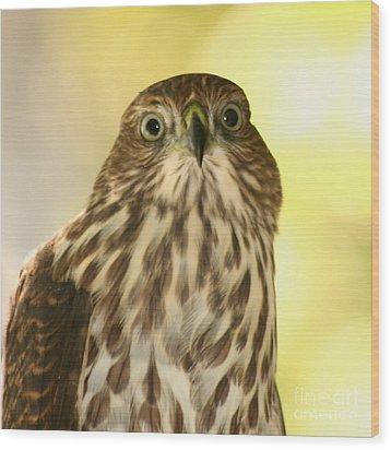 Sharp-shinned Hawk Wood Print by Bob and Jan Shriner