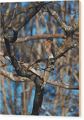 Wood Print featuring the photograph Sharp Shinned Hawk by Mim White