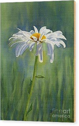 Shasta Daisy Flower With Blue Green Background Wood Print by Sharon Freeman