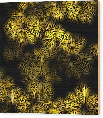 Shattered Daisy 2 Wood Print by Patricia Keith