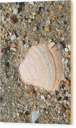 Wood Print featuring the photograph She Sells Sea Shells by Dick Botkin