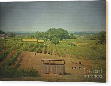 Wood Print featuring the photograph Sheep Among The Vineyards by Maria Janicki