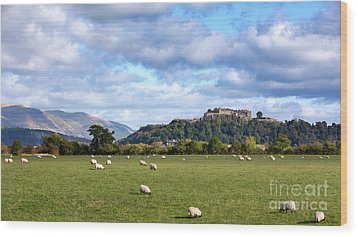 Sheep And Stirling Castle Wood Print by Jane Rix