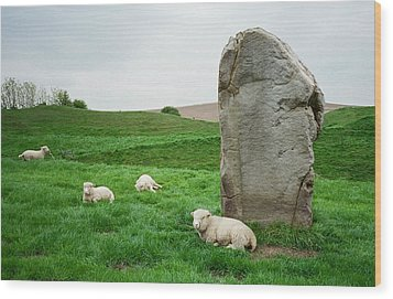 Sheep At Avebury Stones - Original Wood Print by Marilyn Wilson