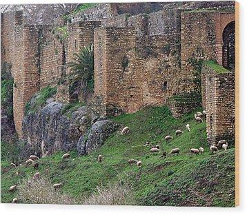 Sheep Cliff Wood Print
