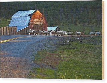 Sheep Crossing Wood Print by Theresa Tahara