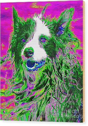 Sheep Dog 20130125v2 Wood Print by Wingsdomain Art and Photography