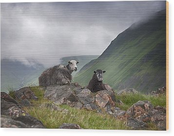 Sheep Wood Print