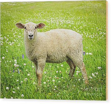 Sheep In Summer Meadow Wood Print by Elena Elisseeva
