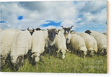 Sheep In The Field Wood Print by Jelena Jovanovic