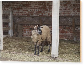 Sheep - Mt Vernon - 01132 Wood Print by DC Photographer