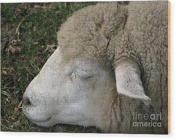 Sheep Sleep Wood Print by Ann Horn