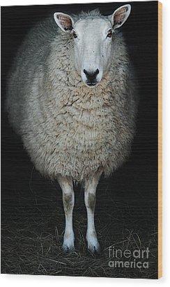 Sheep Wood Print by Stephanie Frey