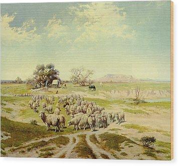 Sheepherding Montana Wood Print by Olaf Seltzer