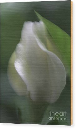 Wood Print featuring the photograph Sheer Elegance by Mary Lou Chmura