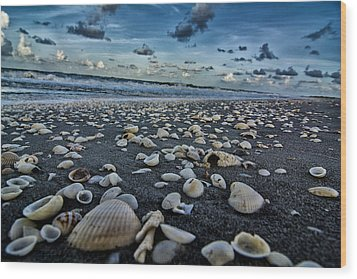 Shell Beach Wood Print by Kevin Cable
