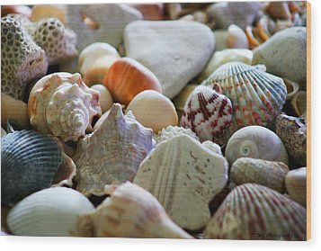 Shell Collection Wood Print