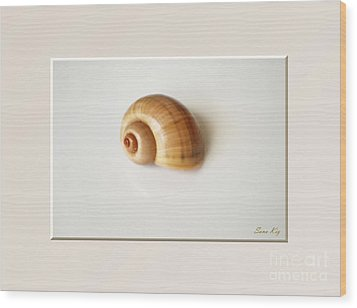 Shell. Delicate Colors Wood Print
