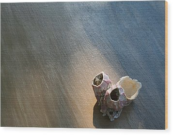 Shell House Wood Print by Paulette Maffucci