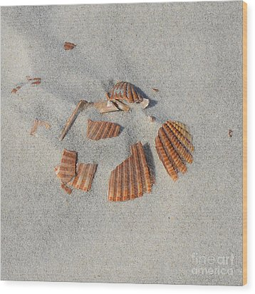 Shell Jigsaw Wood Print by Meandering Photography