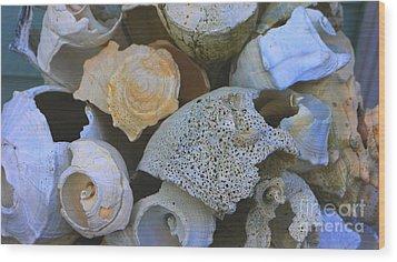 Shell Wood Print by Nancie DeMellia