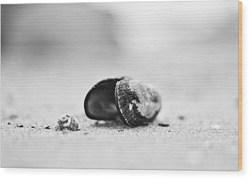 Shell On The Beach Wood Print by Andrew Raby
