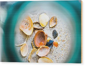 Shell Paradise  Wood Print by Mary Ward