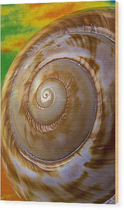Shell Spiral Wood Print by Garry Gay