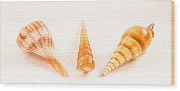 Shell Trio Wood Print by Jean Noren