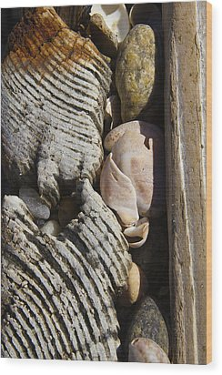 Shell Work  Wood Print by Eugene Bergeron
