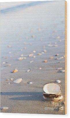 Wood Print featuring the photograph Shells 02 by Melissa Sherbon