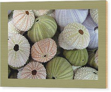 Shells 5 Wood Print by Carla Parris