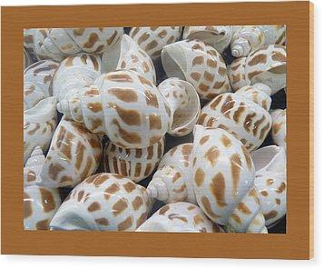 Shells - 7 Wood Print by Carla Parris