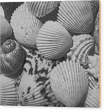 Shells In Black And White Wood Print