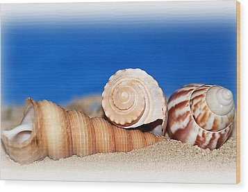 Shells In Sand Wood Print by Francie Davis