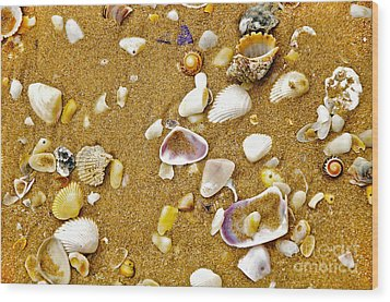 Shells In The Sand Wood Print by Kaye Menner