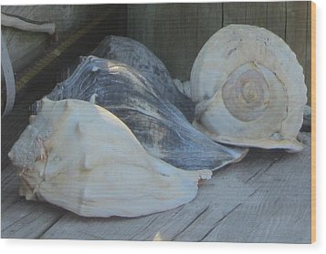 Shells Of Portsmouth Island Wood Print by Cathy Lindsey