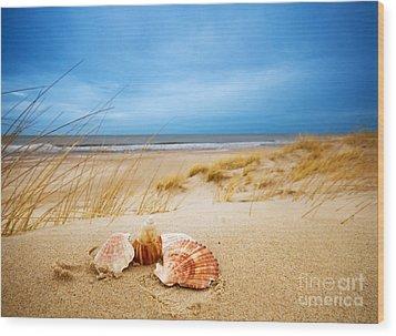 Shells On Sand Wood Print by Michal Bednarek